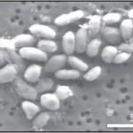 batteri che usano arsenico