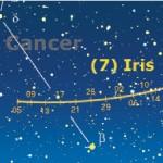 7 iris