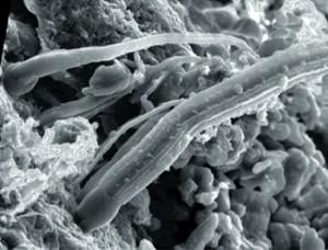 Microfossili nelle meteoriti