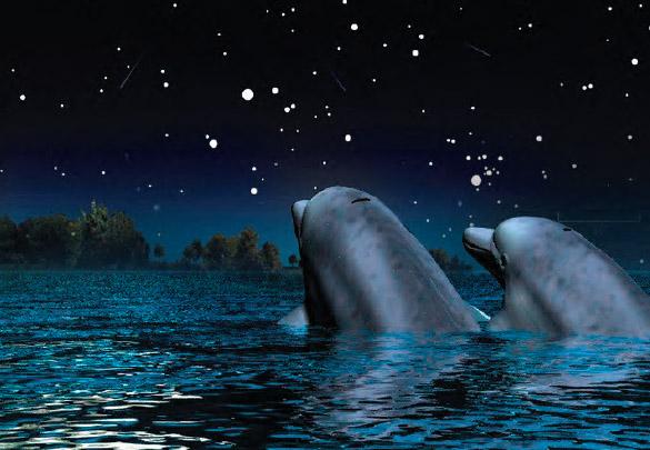Il canto delle balene... Animali_guardano_cielo