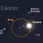 Venere nei pressi di M 44, l'ammasso aperto del Presepe